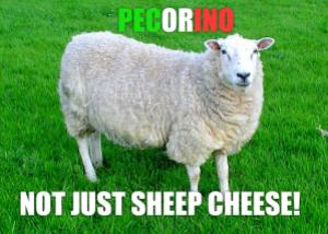 pecora sheep explains pecorino is not just cheese