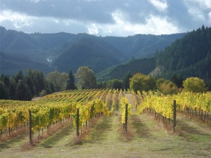 Scott Kelley vineyard in Umpqua